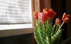 Kokį langų dekorą pasirinkti: nuo virtuvės iki miegamojo zonos
