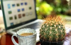 Paneigė mitą apie kaktusus prie kompiuterio