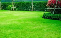 Sėjame veją – kaip teisingai išsirinkti sėklų mišinį?