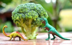 Kodėl brokolis vadinamas viena sveikiausių daržovių +3 receptai
