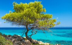 Graikija, Chalkidikės pusiasalis