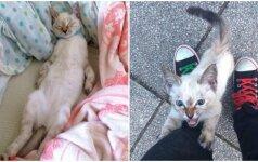 Miela istorija: kačiukas parke išsirinko savo žmogų ir privertė jį parsinešti namo