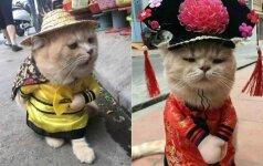 Išraiškingas katinas tapo žvaigžde: rengiasi linksmais kostiumais
