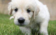 Tinkamiausia šuns veislė pagal jūsų Zodiako ženklą