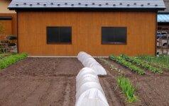 Kraštovaizdžio architektų patarimai, kaip planuoti naują daržą