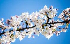 Astrologės Lolitos prognozė balandžio 28 d.: sėkminga diena