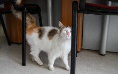 Vertėjos į savo biurą atsiveda net kačiukus iš gatvės