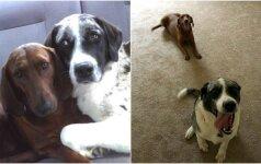 Nusprendusi priglausti šunį, moteris nustebo: namo grįžo su dviem