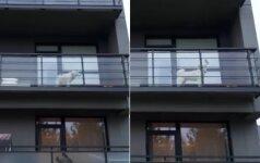 Ramybės nedavė daugiabučio balkone per dienas kaukiantis šuo: įsikišus pareigūnams situacija kardinaliai pasikeitė