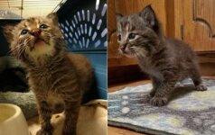 Vyras išgelbėjo mažą katytę: nustebo sužinojęs, ką iš tiesų parsivedė namo