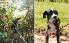 Per plauką nuo nelaimės: pažiūrėkite, kaip išgelbėjamas uolose įstrigęs šunelis