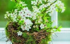 Kūrybiškas sprendimas, kuris pasitarnaus ir pavasarį, ir vasarą