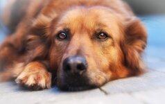 Nuomonė. Benamių gyvūnų naikinimo verslą finansuos mokesčių mokėtojai