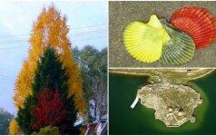 Gamtos dovanos Lietuvai: mylintys mūsų šalį labai apsidžiaugs