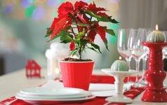 TOP 10 kambarinių gėlių, kurios yra tapusios Kalėdų simboliais visame pasaulyje
