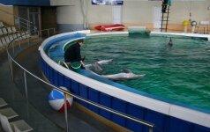Į Lietuvą parskraidinami pirmieji delfinai