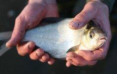 Nuo pirmadienio draudžiama žvejoti karšius