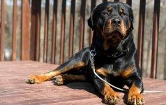 Statuso šunys – išpūstas burbulas ar reali problema?