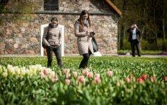 Burbiškio dvare žadama neįprasta Tulpių žydėjimo šventė