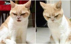 Pikčiausias pasaulio katinas: jo žvilgsnis varo iš proto