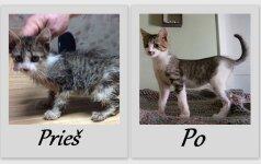 Neįtikėtini pokyčiai: išgelbėti kačiukai PRIEŠ ir PO