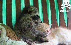 Tikra meilė tik tarp meškėno ir katino