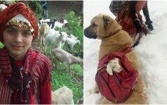 Mergaitė nesutriko, kai ožka pradėjo gimdyti: atėjo į pagalbą su savo šunimi