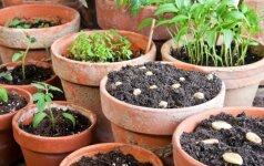 Ekspertų patarimai, kaip pasiruošti sėjai ir sodinimui