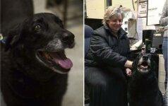 Stebuklas, nepaliekantis abejingų: prieš 10 metų pasiklydusi kalytė sugrįžo į namus