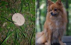 Vilniuje masiškai nuodijami šunys: šeimininkai bijo savo augintinius išvesti į gatvę