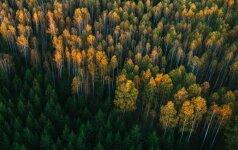 Papasakojo, ką ir kaip darys nauja valstybinė miškų įmonė