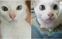 Magiškos katės akys stebina pasaulį