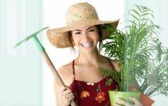 Ar teisingos gėlės auga jūsų namuose? Kuri mažina vėžio riziką, kuri sužadina pyktį?