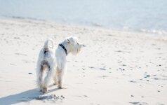 Visuose pajūrio paplūdimiuose šiemet bus laukiami keturkojai – išskyrus Palangą