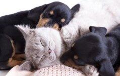 Rudens pavojai šunų ir kačių sveikatai: kaip apsisaugoti?