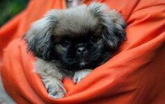 Pietų Korėjos prezidentas priglaudė šunį: gyvūnas turėjo būti suvalgytas