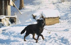 Šuns šaldymas būdoje gali baigtis net kalėjimu