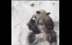 Filmuotoje medžiagoje – sniegu besidžiaugianti panda, skubantys elniai ir žavūs šunys