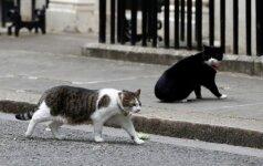 Katinas paklydėlis namo sugrįžo po 18 metų