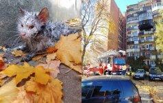 Vilniečiai negali atsižavėti ugniagesiais: iš degančio namo išgelbėjo kačiuką