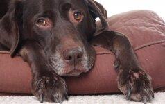 Ko negalima daryti, jei šuo susirgo