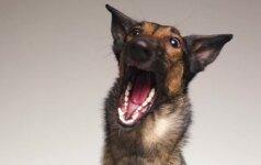 Fotografo darbas nepaliks abejingų: beglobiams gyvūnams tai padeda rasti namus
