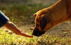Žiaurus elgesys su gyvūnais: pakartas dar vienas šuo