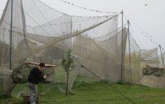 Vėl suplėšyti ornitologų tinklai