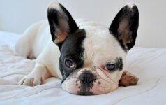 10 stebinančių dalykų, kurių nežinojote apie savo šunį
