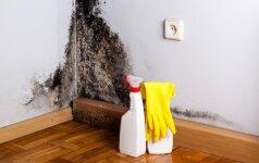 Ką daryti, pastebėjus patalpoje pelėsį?