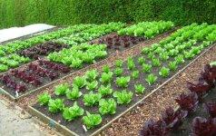 Kaip suplanuoti ir paruošti peržiemojimui mažą daržą?
