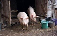 Virusologas: kiaulių maro sustabdymui dabar reikia milijardo, o po pusės metų reikės ir 10 milijardų