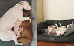 Užburianti gyvūnų draugystė: prieglaudoje susibičiuliavo kačiukai, šuniukai ir paršelis