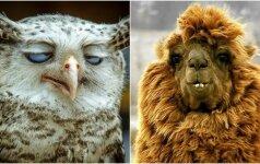 10 gyvūnų, kuriems nepasisekė nuotraukose atrodyti gerai
